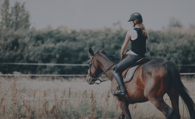 Equestrian Management Software